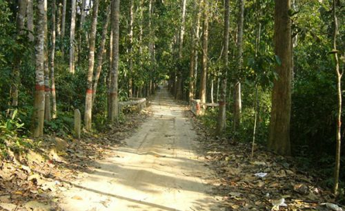 Lawachara National Park one of the tourist spot of moulvibazar