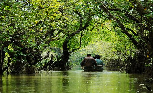 Ratargul swamp forest is one of the most beautiful tourist spot/place in Sylhet.